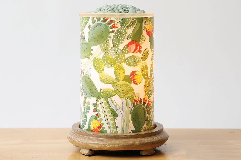 cactus simmering light